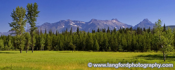 This panorama shows a small meadow with the mountains of Central Glacier rising in the distance.
