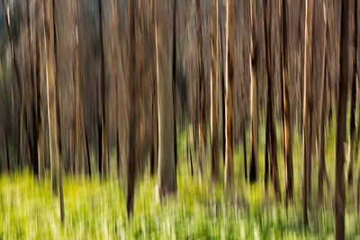 Motion Blur Trees