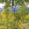 Aspen and East Flattop Mountain