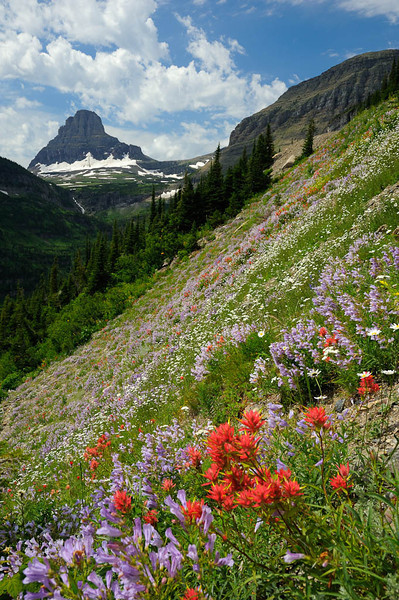 "Wildflowers ""Going to the Sun"" - Glacier National Park, Montana - Darren Stratemeier - July 2009"