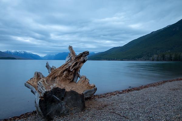 McDonald Lake Stump
