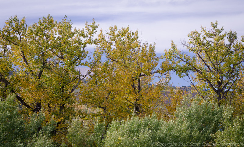 Lightshine on autum foliage, Babb Montana