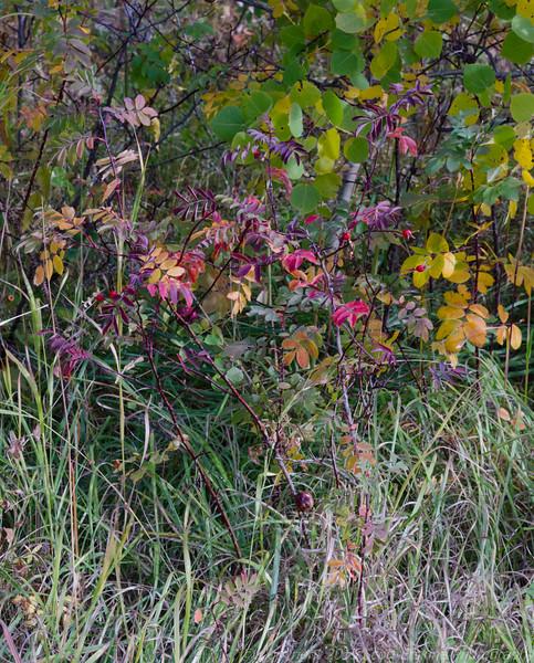 Trailside color near Babb Montana