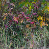 Trailside color near Babb Montana
