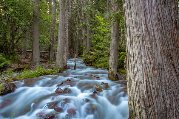 Jackson Creek 1