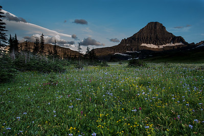 Alpine Meadow near Logan Pass