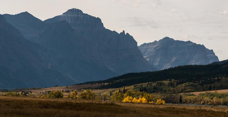 Gold Aspen, St Mary, Montana