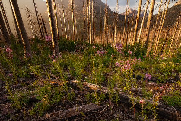 Wildflowers and Signs of fire
