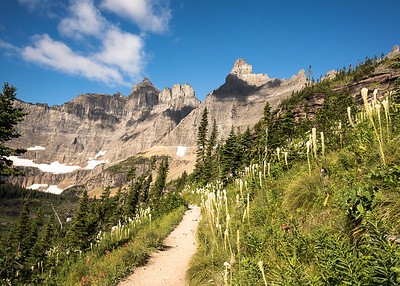 Beargrass and paintbrush out in full force along the trail to Iceberg Lake in Glacier National Park