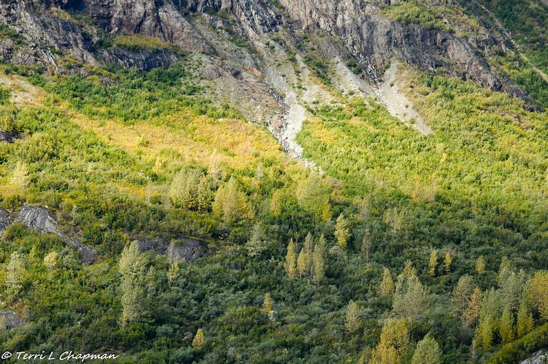 Fall in Glacier Bay.