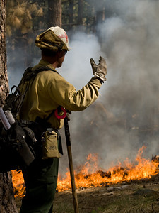 Gladiator Fire, Crown King, AZ, Prescott National Forest, May, 2012