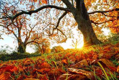Autumn Sunrise 2020