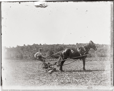 Farm-5384