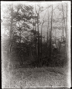 Landscape-5206