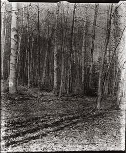 Landscape-5141