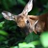 Mother Deer