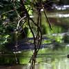 Aboretum River