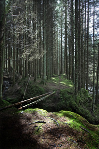 Glenbarrow forest and River Barrow  Picture© Niall O'Mara 25th April 2018 - niallomara@me.com