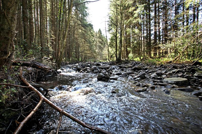 Glenbarrow forest and River Barrow  Picture© Niall O'Mara 25th April 2018 - niallomara@me.com