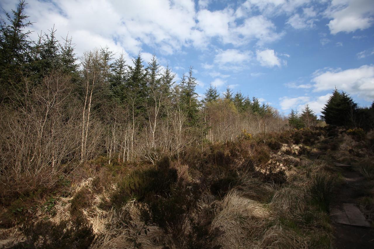 Glenbarrow Trail