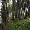Glenbarrow forest and River Barrow <br /> Picture© Niall O'Mara 25th April 2018 - niallomara@me.com