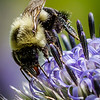 QCPC-08-Busy_Bee-Joaquin_Espejo