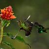 Paul Riewerts_Feeding Hummingbirds