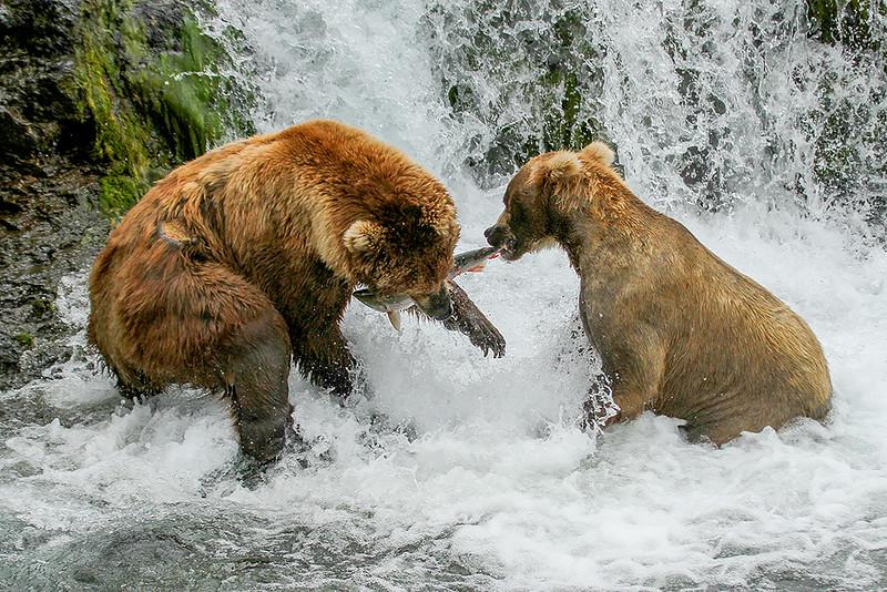 Jack Denger  Bear Tug