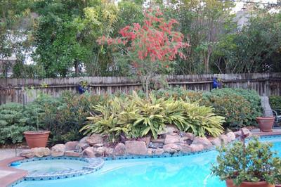 2006 04-01 Backyard