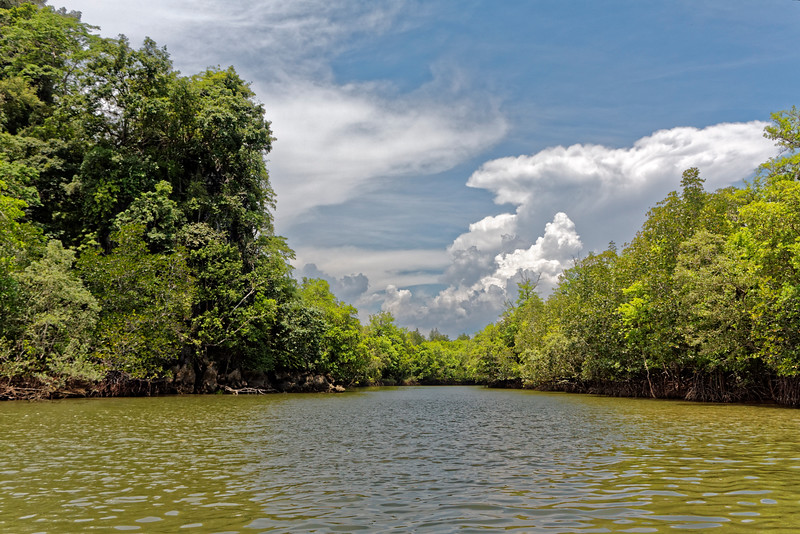 The mangrove forests that line the waterways at Krabi play an important role in the ecosystem of the region, serving to protect against erosion and providing habitat for diverse species of wildlife, including birds, macaques, crocodiles, fish, and shellfish.