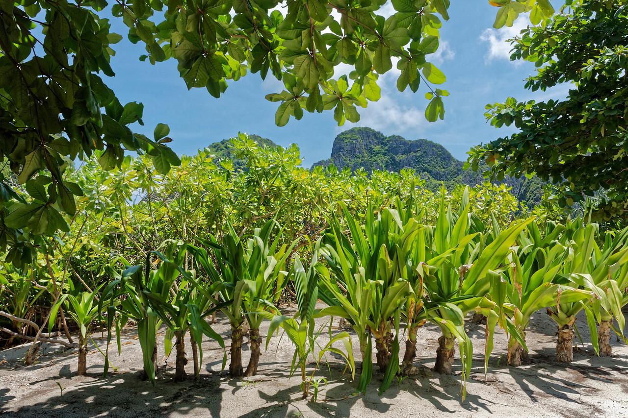 Inland on Ko Phi Phi Leh