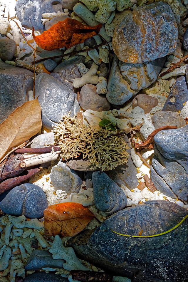 Natural still life on the shore at Ko Hua Kwan