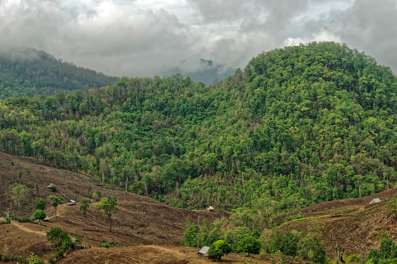 Clearcutting of forested land and slash-and-burn farming, though illegal, are widespread in many parts of Thailand. Both have contributed to serious environmental problems, including loss of habitat, erosion, and flooding.