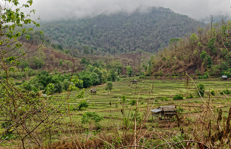 Forested hilside and rice fields above Mae Hong Son, northern Thailand