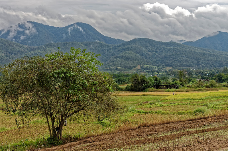 Farmland between Chiang Mai and Pai