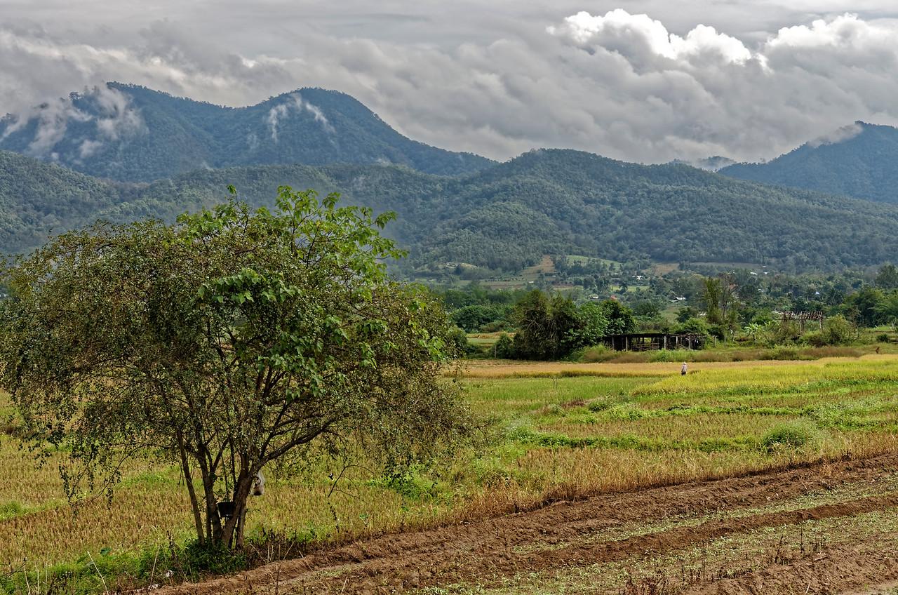 Farmland between Chiang Mai and Pai