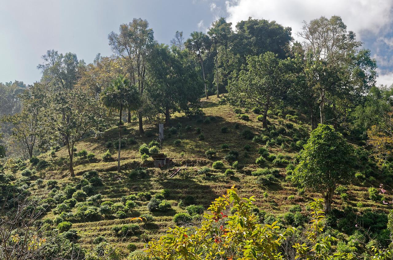 Chiang Dao hillside