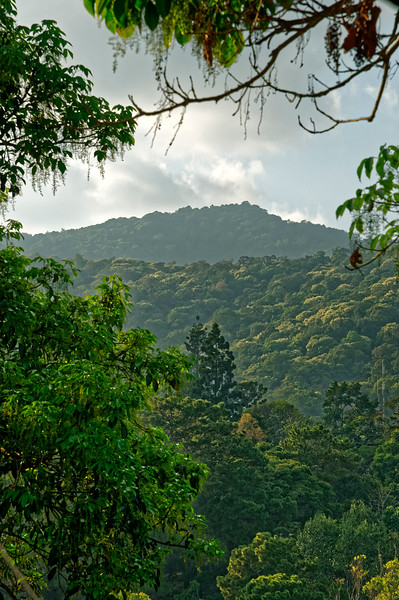 Late-afternoon view from Wat Doi Suthep of the forested mountains surrounding it