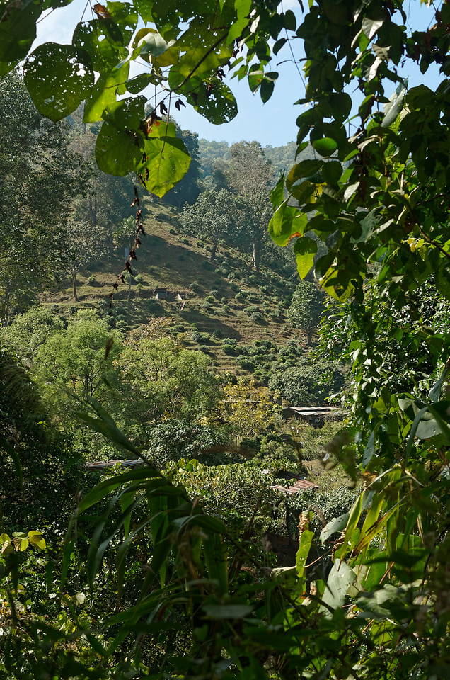 Cultivated hillside above Chiang Dao, 45 miles north of Chiang Mai