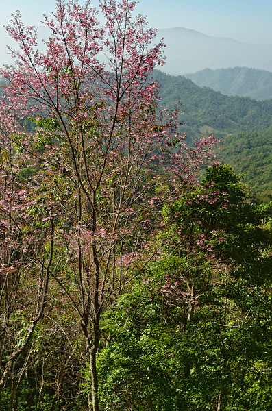 A view of surrounding mountains from Doi Chiang Dao, Chiang Mai Province