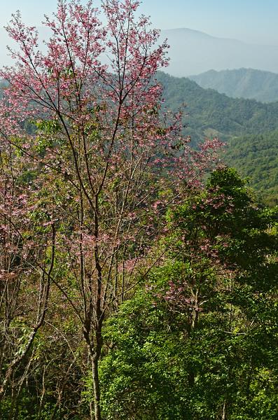 A view of surrounding mountains from Doi Chiang Dao, Chiang Mai Province