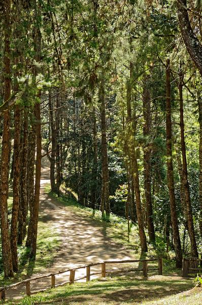 Trail on Doi Chiang Dao
