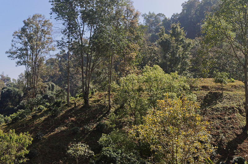 Another hillside view above Chiang Dao