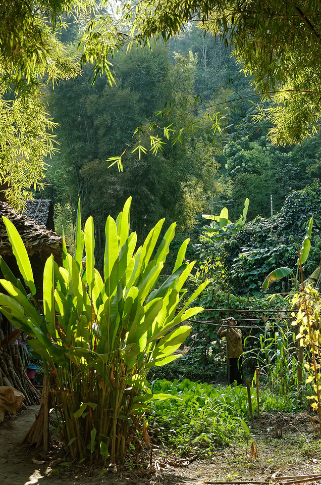 A villager in his garden, Mae Sa Valley
