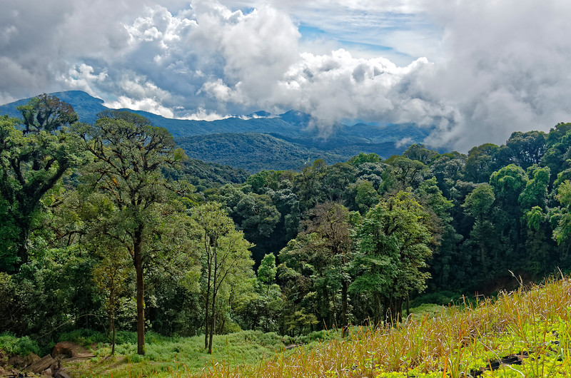 A view from the slopes of Doi Inthanon