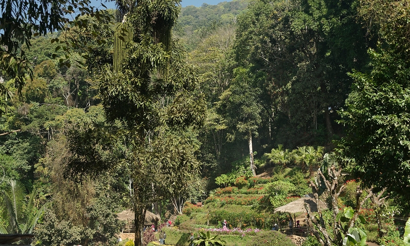 A view of the gardens at Doi Pui