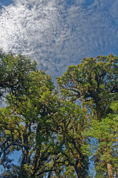 Trees and sky at the summit of Doi Inthanon, at 8,415 feet