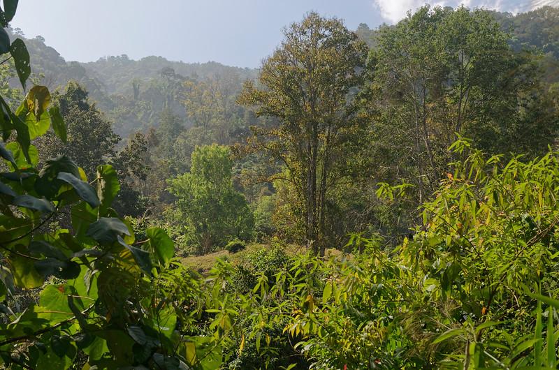 Hillside above Chiang Dao