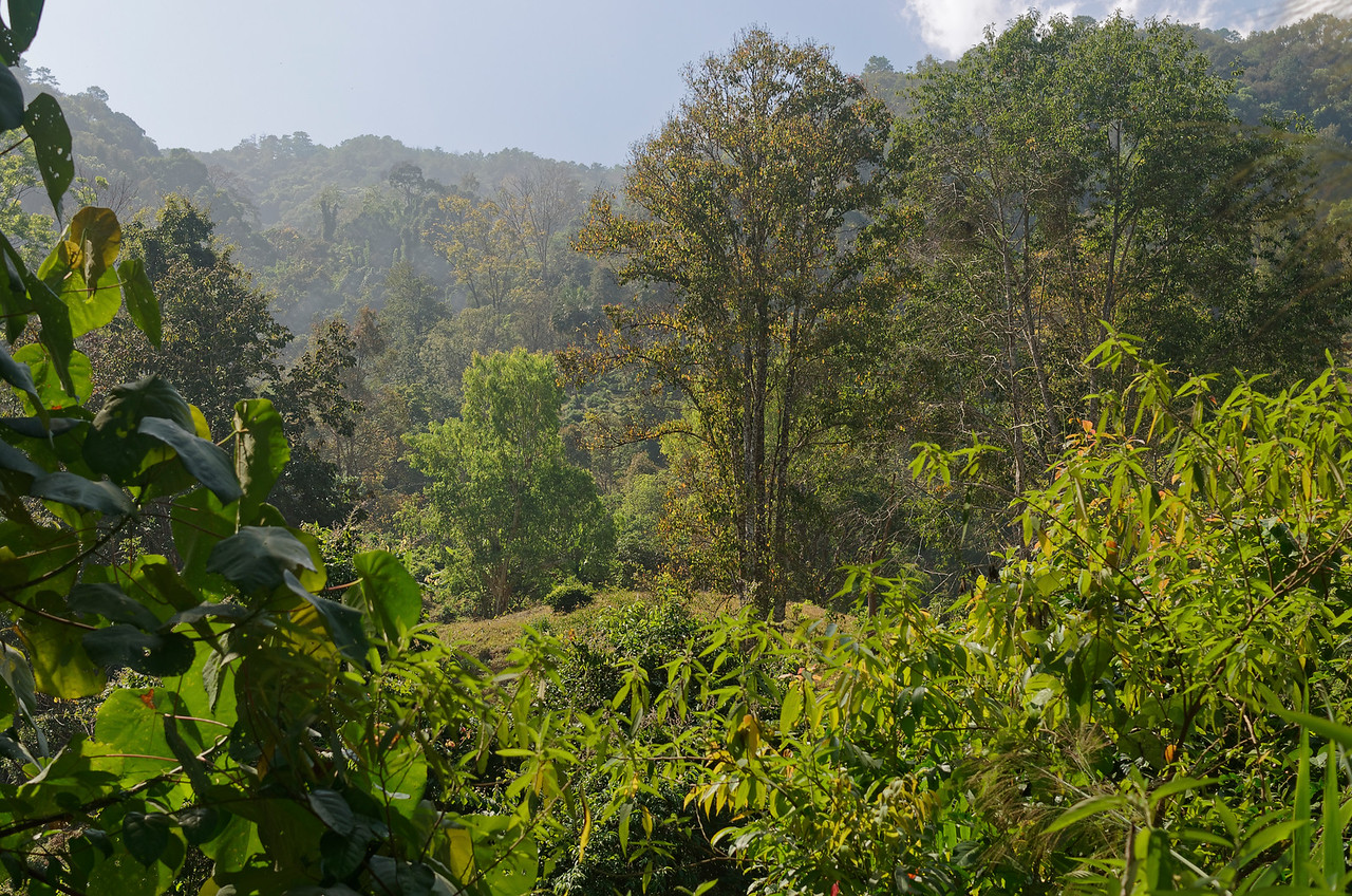 Hillside above Chiang Dao
