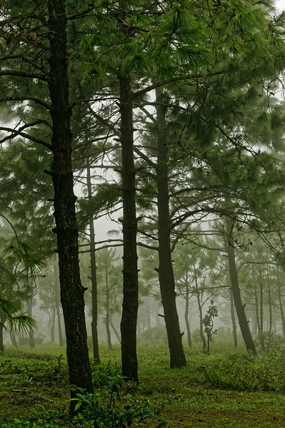 Vegetation in the park ranges from that of grasslands to tropical, evergreen, and pine forests.
